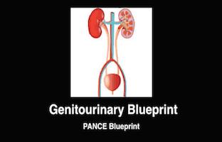 Genitourinary, GU, Renal, Kidney, PANCE Review Courses, PANRE Review Courses, PANCE Review, PANRE Review, PANCE, PANRE, Physician Assistant, NCCPA Blueprint, COMLEX, USMLE, Free CME, CME